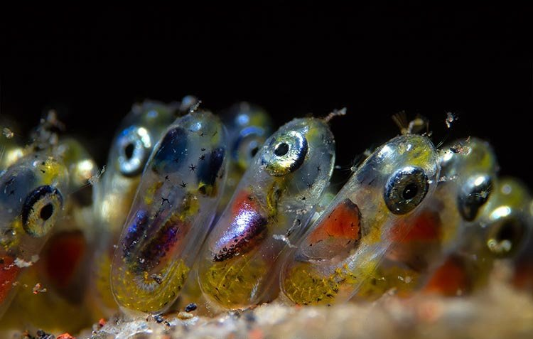 30 завораживающих фотографий подводного мира
