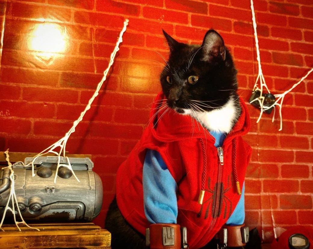 Косплей дня: это кот, нопаук, без него мывсе как без рук