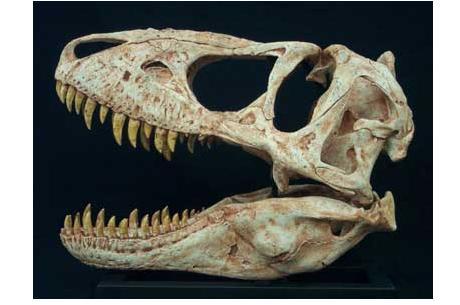 Николас Кейдж вернет монголам украденный череп тираннозавра