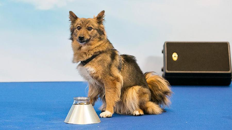 Еще больше хороших мальчиков: вРоссии появилась новая порода собак