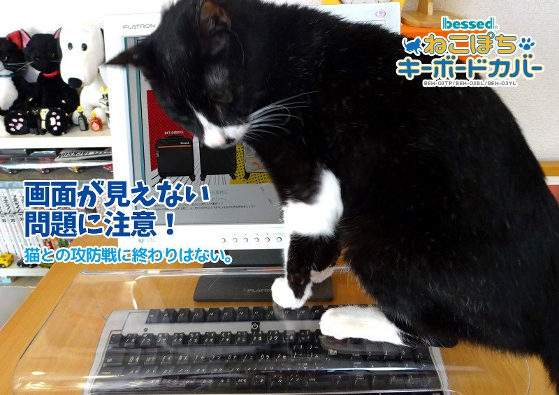 Японские дизайнеры разрешили котам лежать на клавиатурах