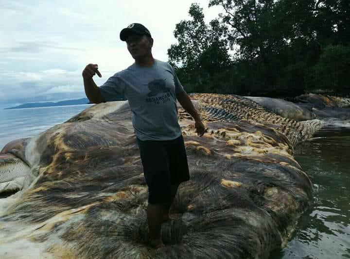 Что запокемон? Туша огромного морского животного пугает индонезийцев