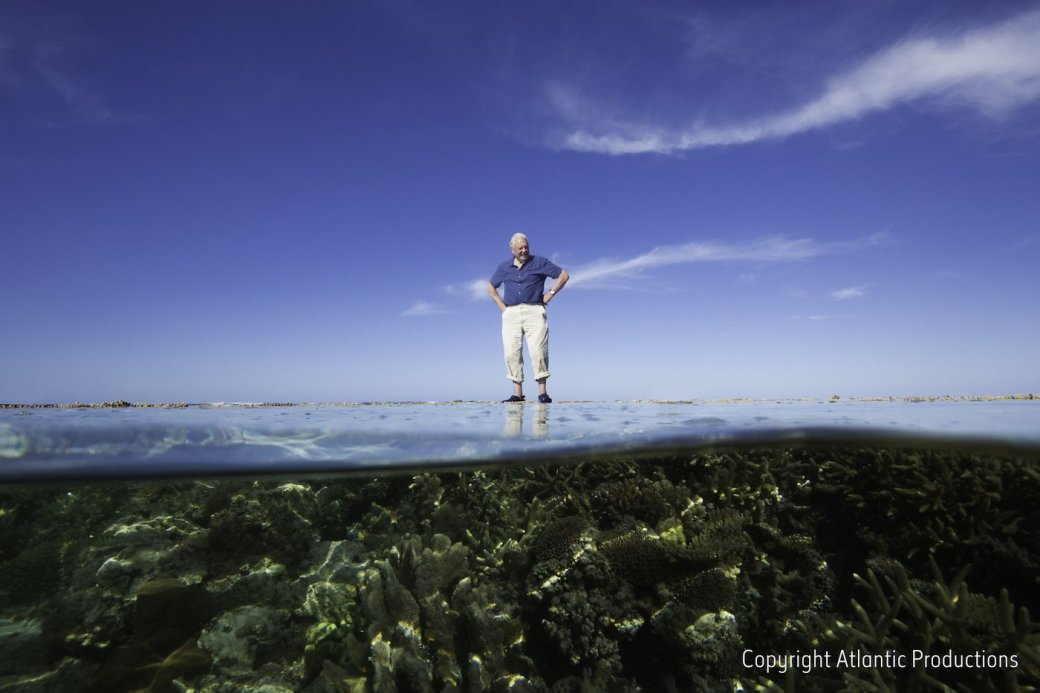 На корм рыбам: VR-экскурсия на Большой Барьерный риф от Google
