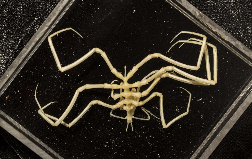 Червь ввиде члена иеще 13 ужасных существ, найденных надне океана