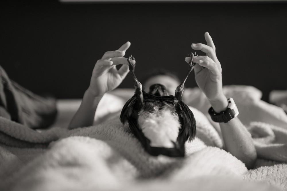 Первым фильмом Эндрю Линкольна после «Ходячих мертвецов» станет драма про сороку Пингвина