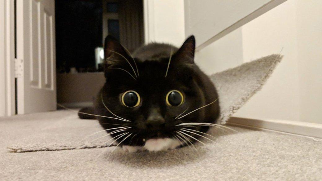Как вИнтернете отмечают японский День кошек